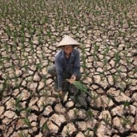 Kondisi Lahan Pertanian Akibat Pupuk Kimia