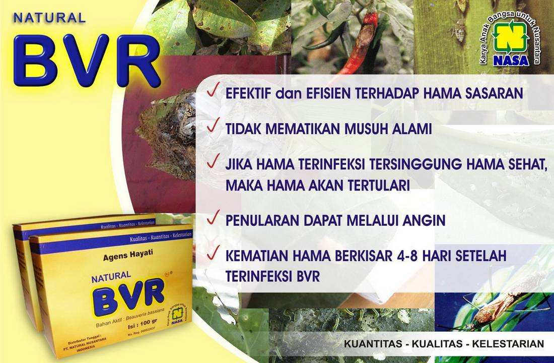 Gambar Natural BVR Nasa Natural Nusantara