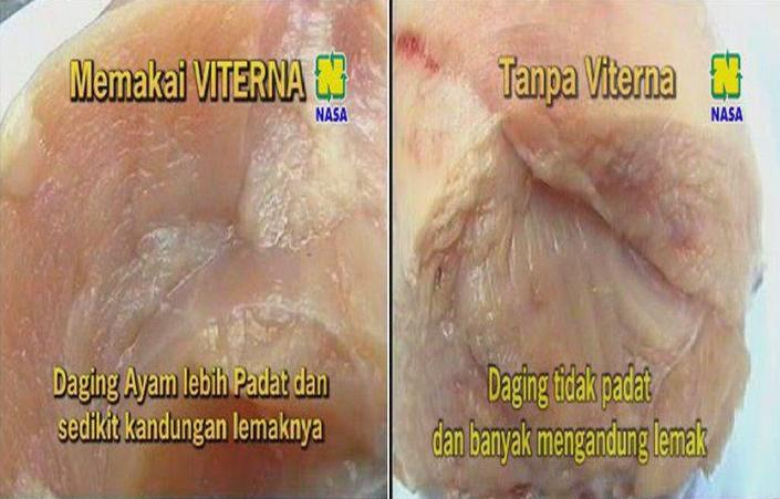 Gambar Perbandingan Daging Ayam Broiler