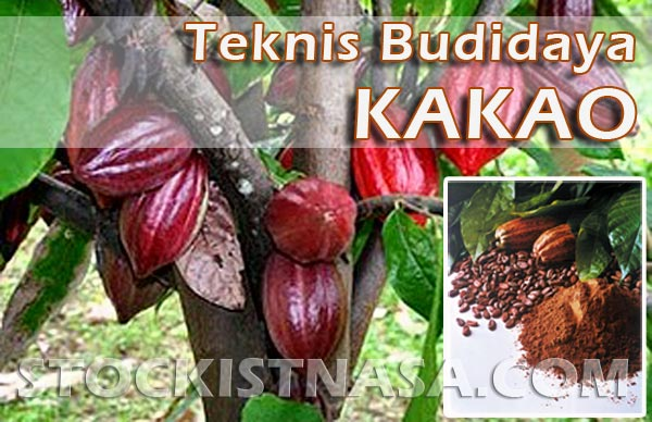Teknik Budidaya Tanaman Kakao