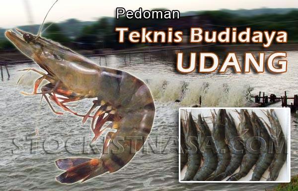 Teknis Budidaya Udang Windu