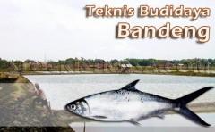 Gambar Teknis Budidaya Bandeng