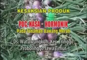 Kesaksian Budidaya Bawang Merah Probolinggo