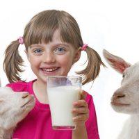 Susu Kambing Etawa – Sehat dan Bergizi
