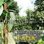Teknik Budidaya Tanaman Lada