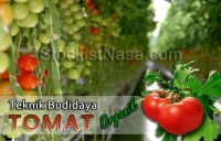 Gambar Teknik Budidaya Tomat Organik NASA