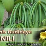 Teknik Budidaya Tanaman Vanili