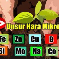Unsur Hara Mikro – Fungsi dan Gejala Kekurangannya