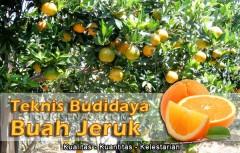 Teknik Budidaya Jeruk