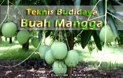Teknik Budidaya Mangga