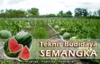 Teknik Budidaya Semangka