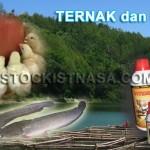 Memaksimalkan Produksi Ternak dan Ikan