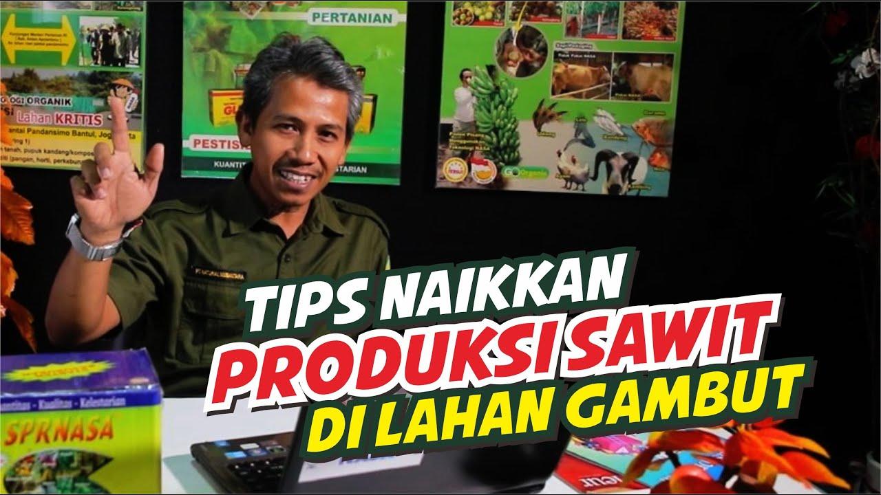 Tips Naikkan Produksi Sawit Lahan Gambut